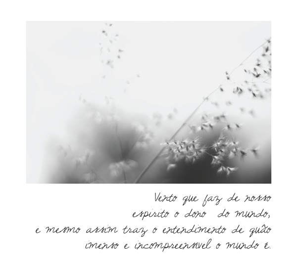 o_vento_06